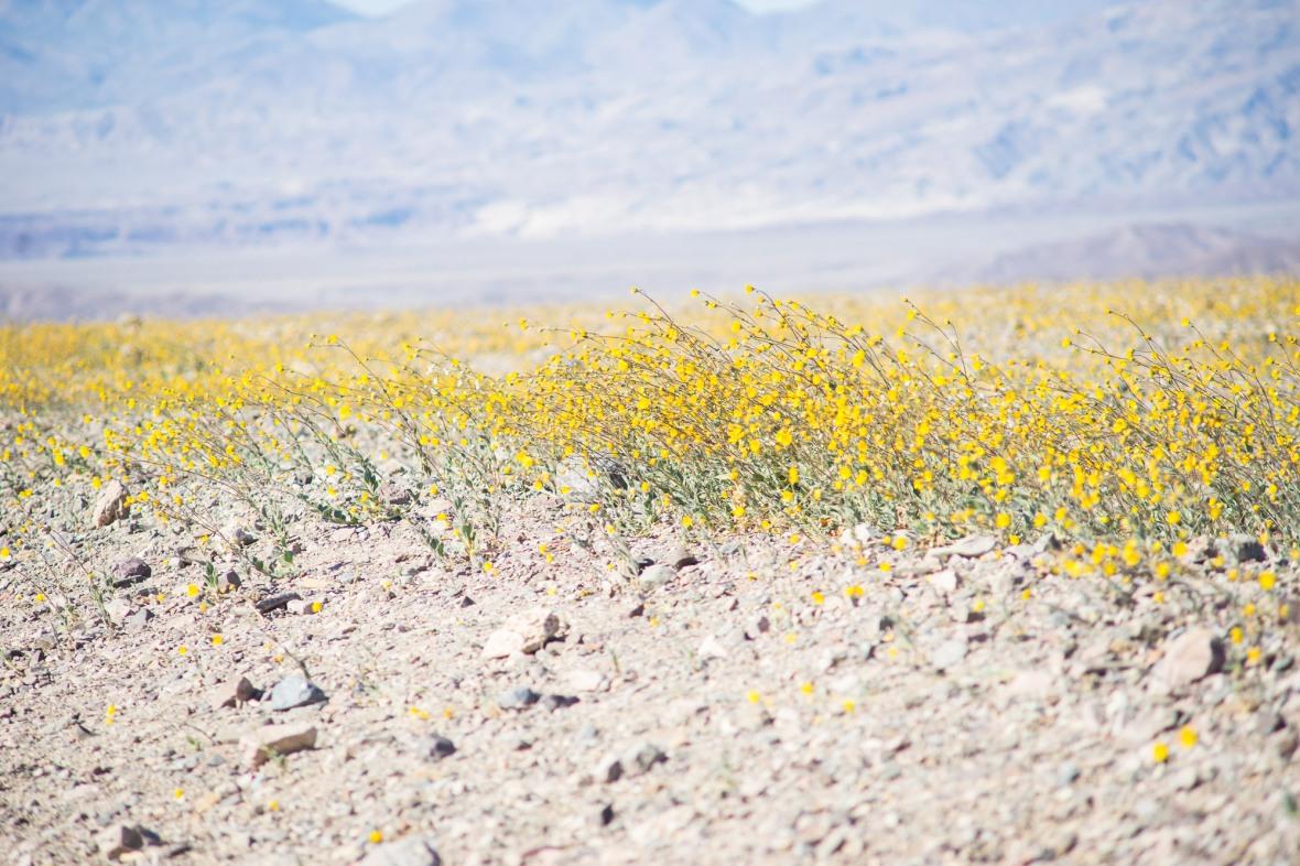 Death_Valley_2016-14