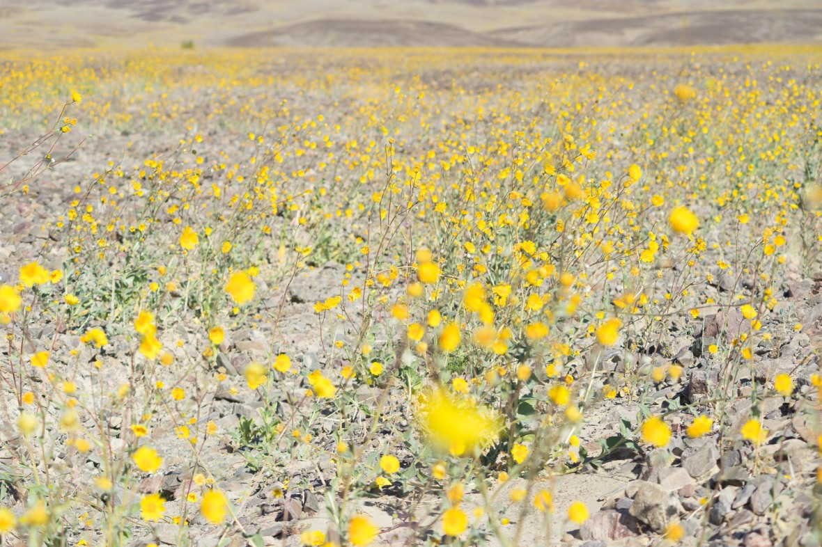 Death_Valley_2016-15