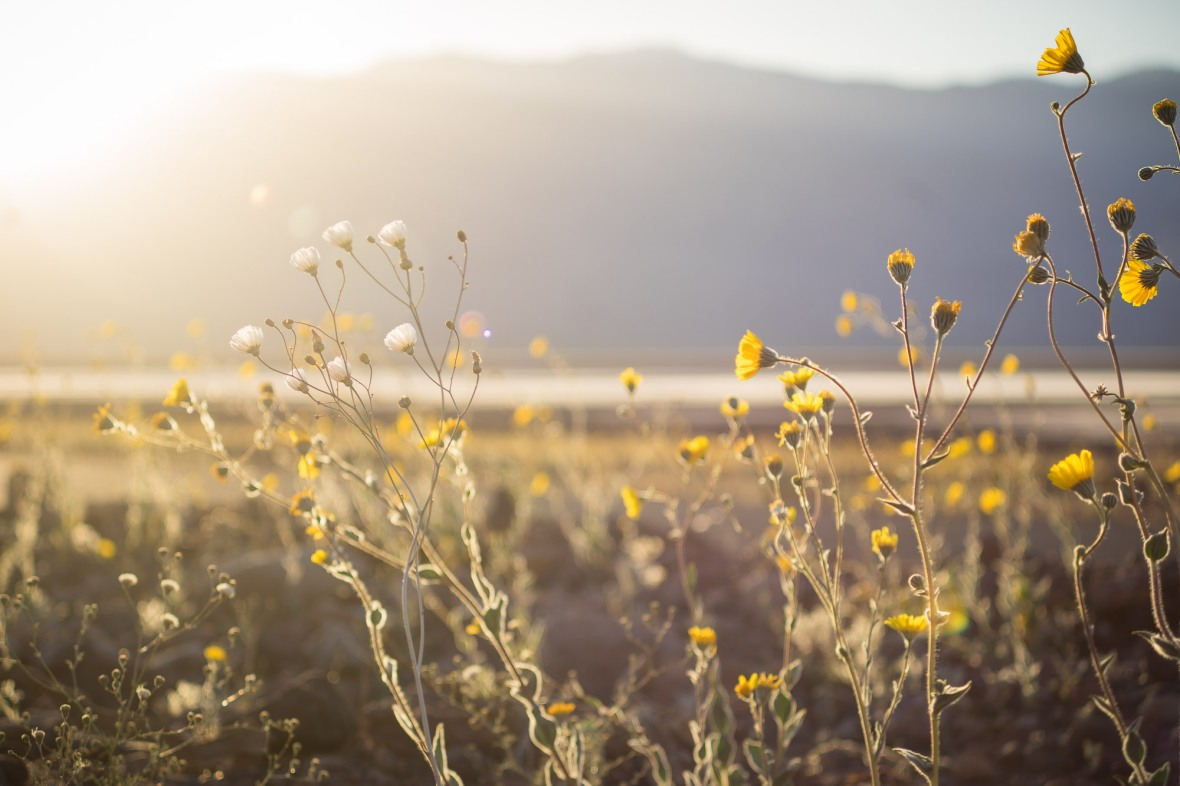 Death_Valley_2016-17