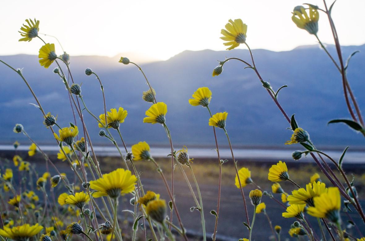 Death_Valley_2016-2