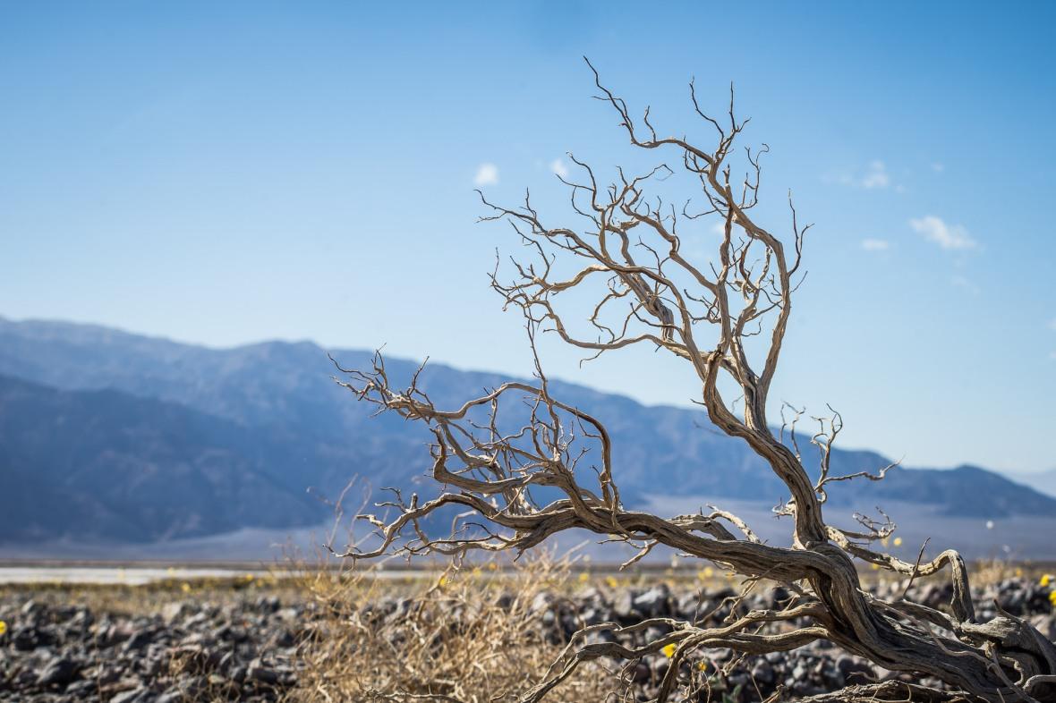 Death_Valley_2016-3