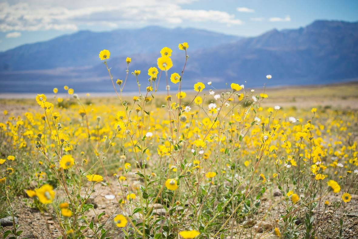 Death_Valley_2016-4