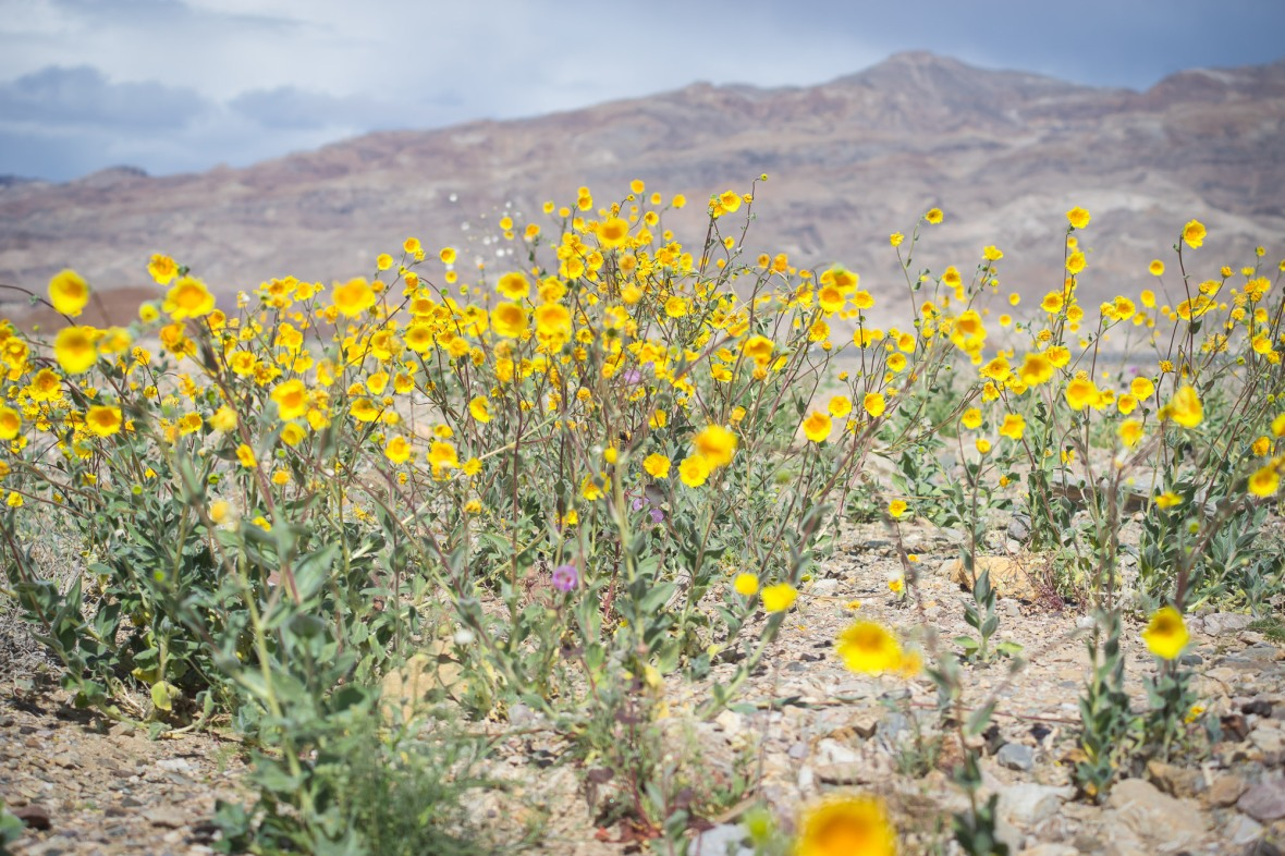 Death_Valley_2016-5